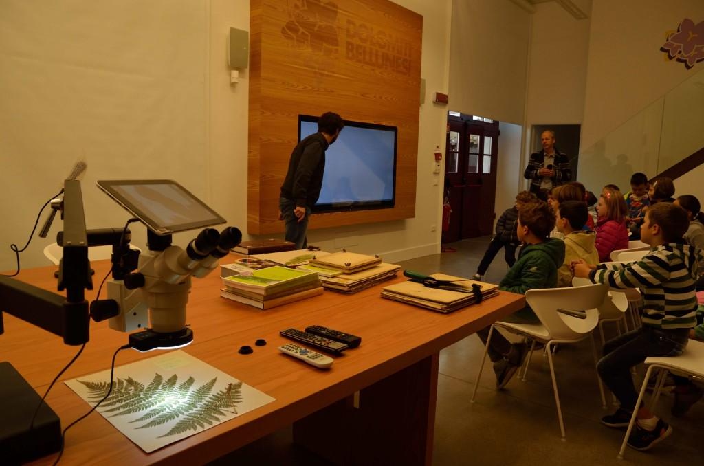 Museo Naturalistico di Belluno: scoprendo gli antichi erbari