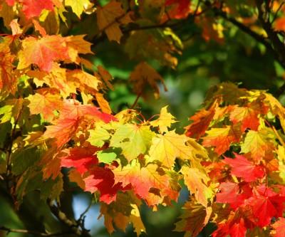 Parco Livelet Revine Lago in autunno
